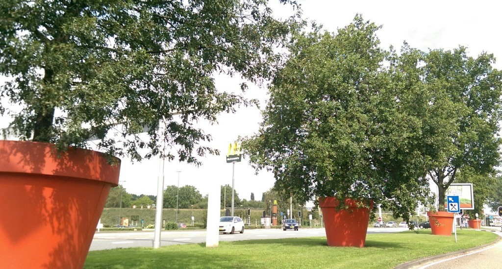 Potted Trees in Rotterdam