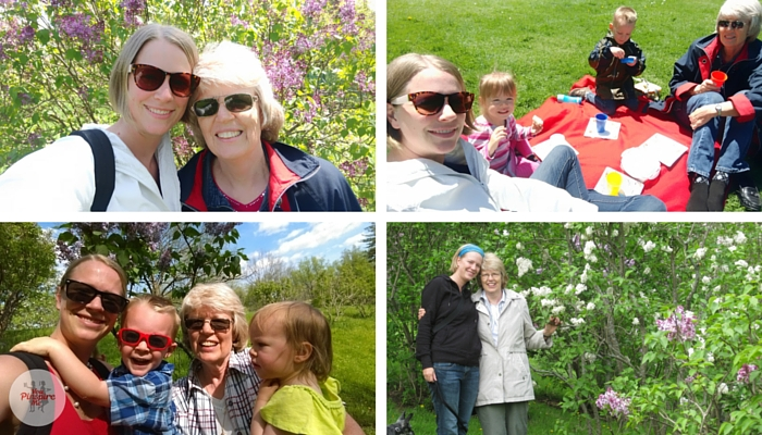 Royal Botanical Gardens Lilacs